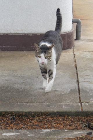 歩き寄る猫