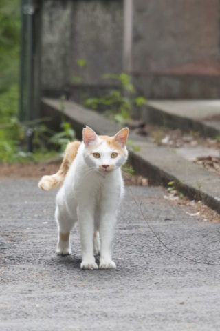 カメラ目線をくれる猫