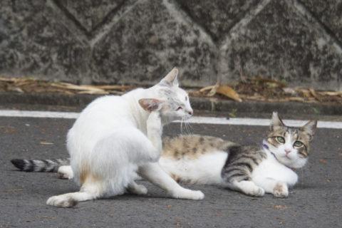 仲良し猫2匹