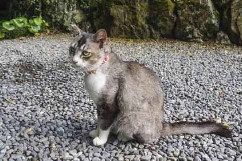 目の綺麗な猫ちゃん