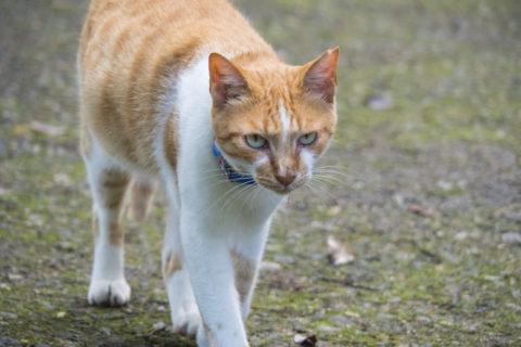 歩み寄ってくる猫
