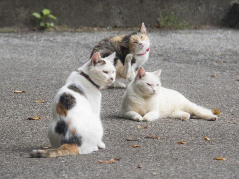 昔からいる猫たち
