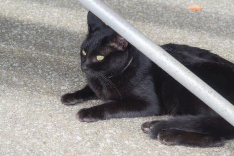 ベンチの下に黒猫