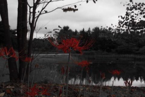 湖面の彼岸花