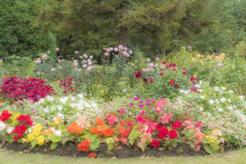 整備されてる花壇