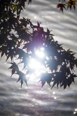 水面と紅葉シルエット