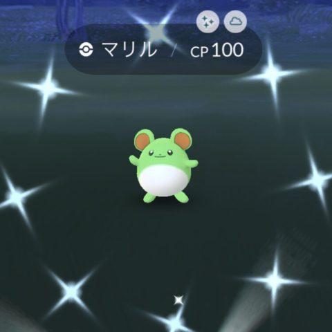 緑のマリル