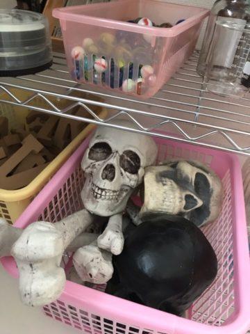 骸骨の模型