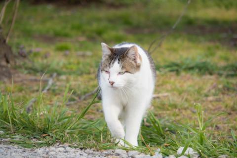 歩み寄る猫
