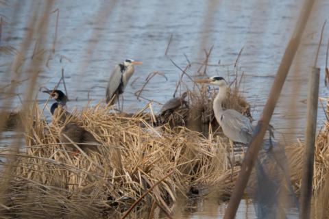 城沼の水鳥