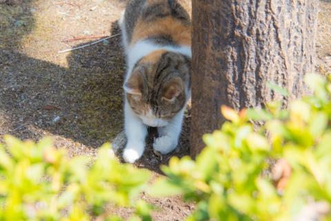 トカゲを狩る猫